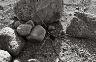 Manzanar 50