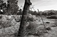 Manzanar 8