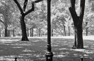 Lamp Post, Central Park, New York 2007