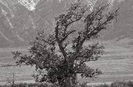 Manzanar 3