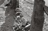 Manzanar 38