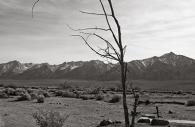 Manzanar 9