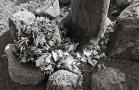 Manzanar 40