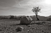 Manzanar 17
