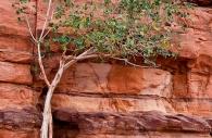Lone Tree, Wadi Rum, Jordan 2008