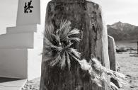 Manzanar 35